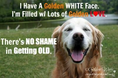 I Have A Golden White Face I M Filled With Lots Of Golden Love