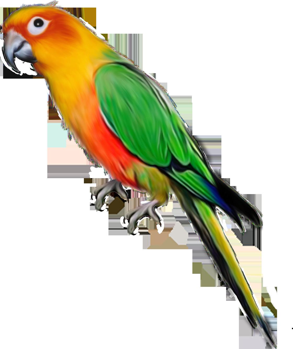 Красивые прикольные, попугай картинка для детей
