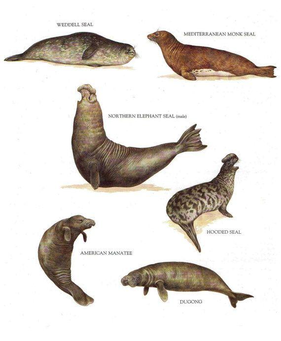 Five Vintage Animal Illustration Prints Eye By Littleshopoflovelys 10 00 Carteles De Animales Anatomia Animal Ilustracion Animal