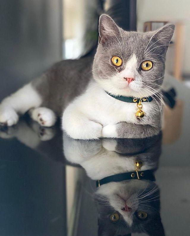 Oscar Cat Collar
