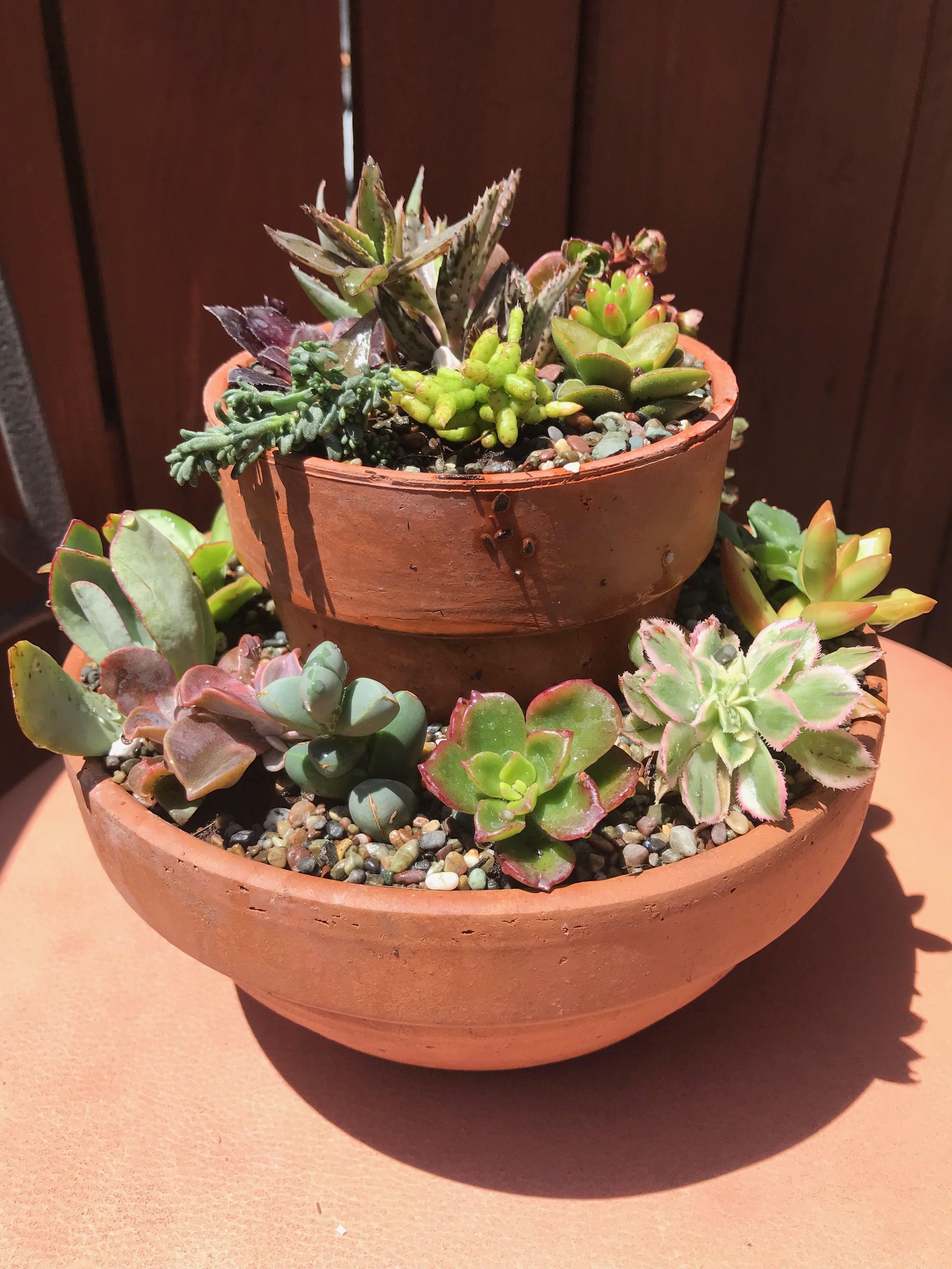 Succulent Pot Idea Succulents Planting Succulents Garden Planters Pots