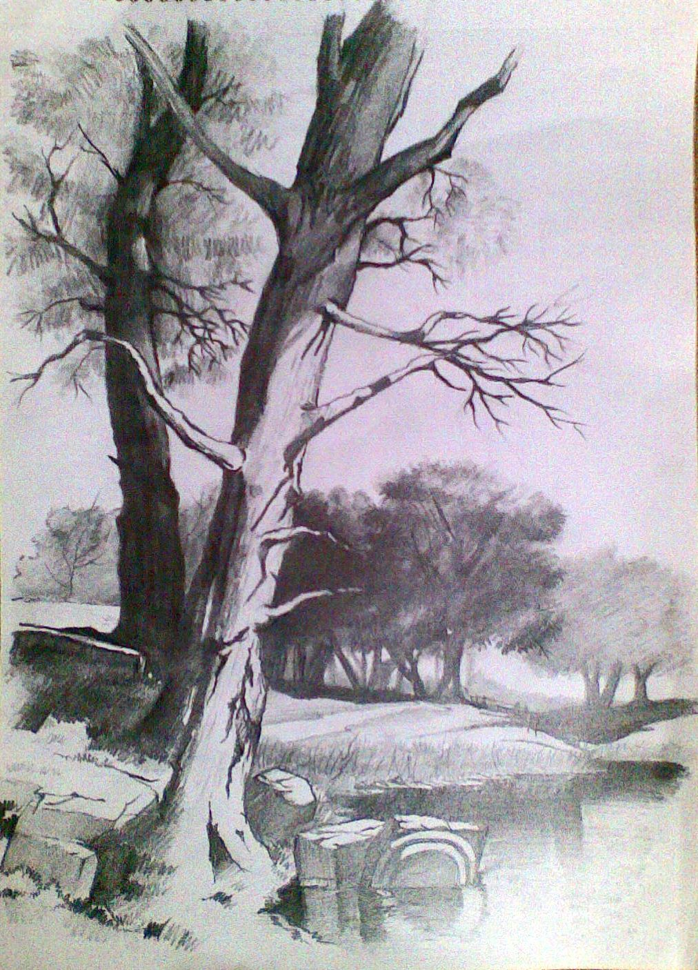 Pencil sketching tutorial beginners photo 1012 for Beautiful drawings of trees