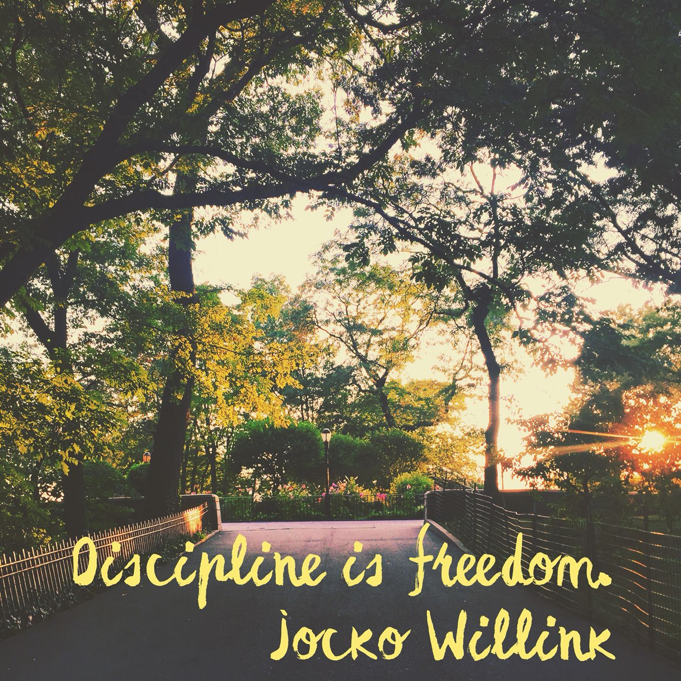 Discipline Is Freedom. Quote By Retired Navy SEAL Jocko Willink