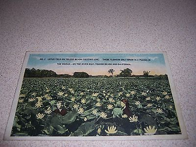 1910s LOTUS FIELD on TOLEDO BEACH ELECTRIC LINE OHIO OH. ANTIQUE POSTCARD