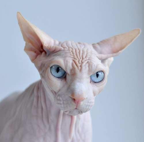 naked cat!!