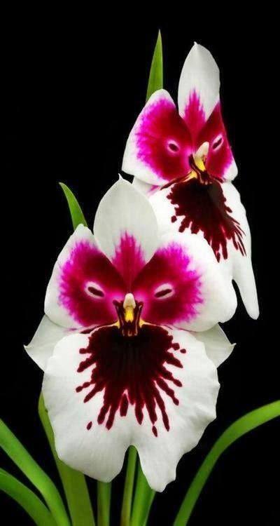 Looks Like An Owl Strange Flowers Unusual Flowers Unique Flowers