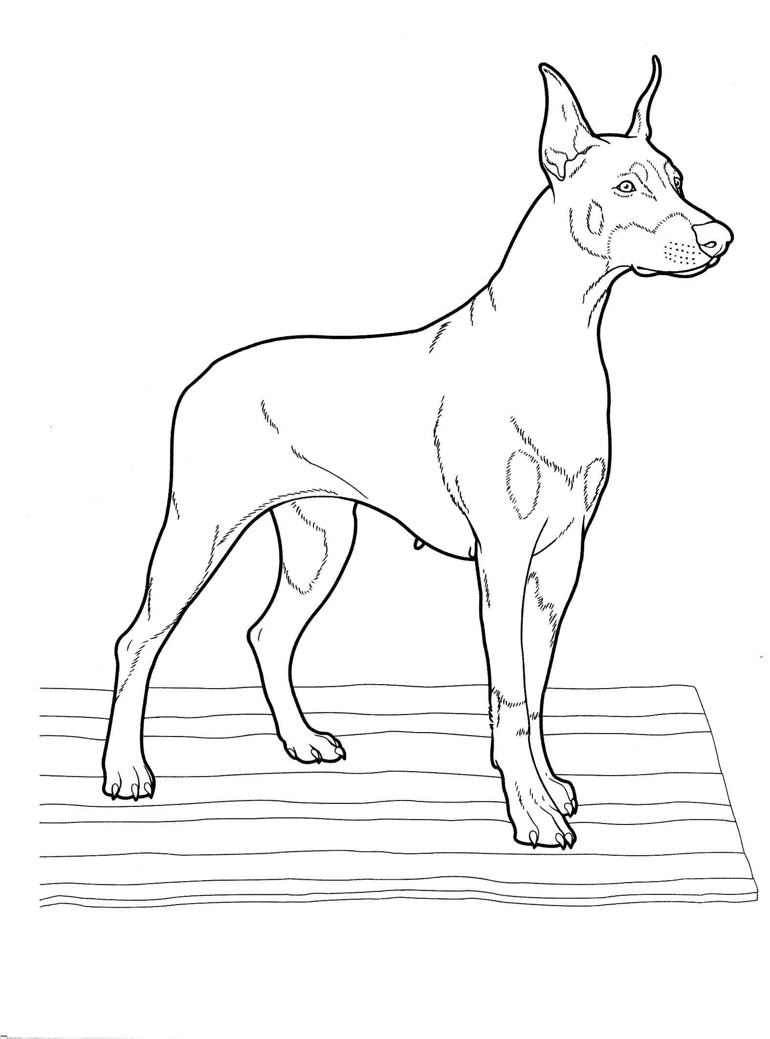 dog_coloring_pages_25 Teenagers coloring pages | animales ...