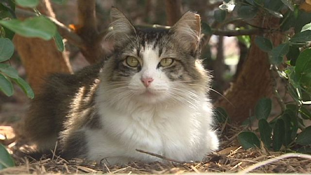 Animal Care Services brings back Barn Cat program | Cats ...
