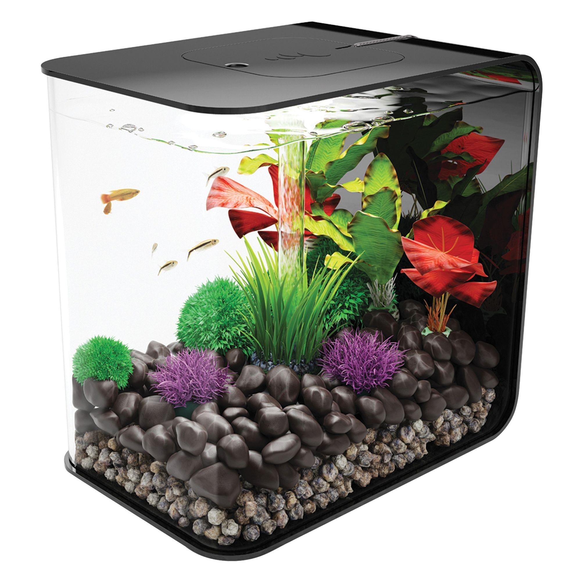 Biorb Flow 8 Gallon Led Aquarium In 2020 With Images Biorb Fish Tank Aquarium Biorb