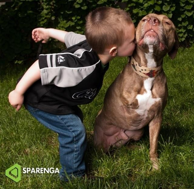 A Boy And His Tripod Pittie True Love 3 Bully Breeds
