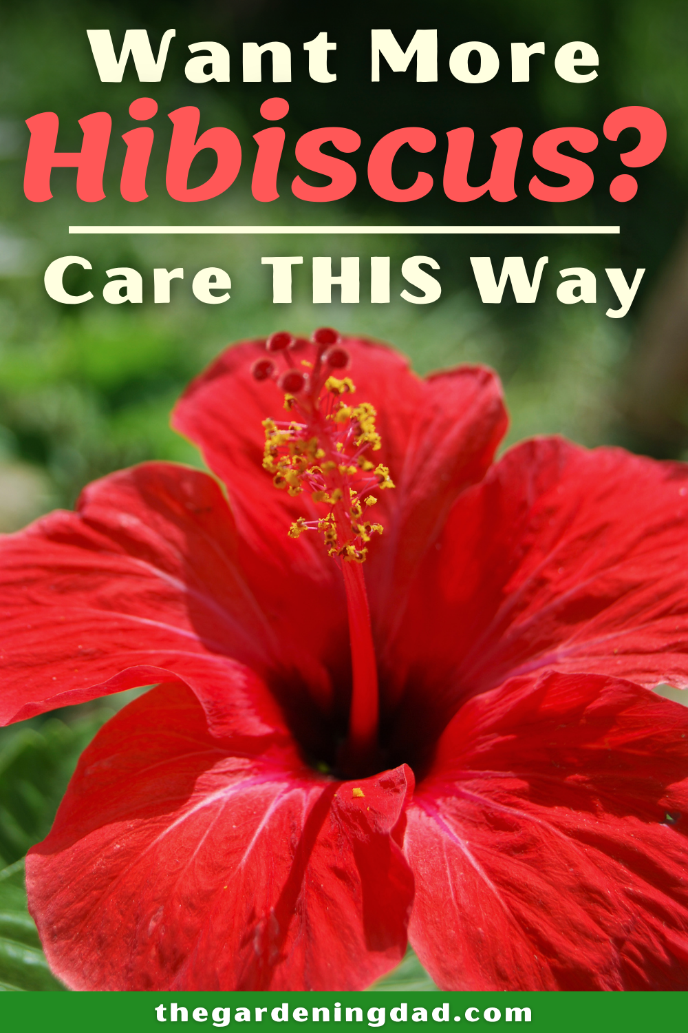Ultimate Guide To Hibiscus Care Indoors The Gardening Dad Plant Care Growing Vegetables Gardening For Beginners