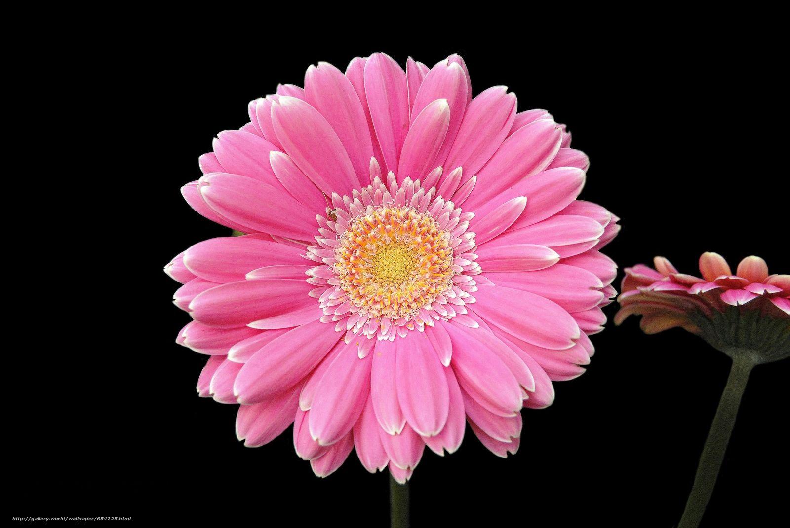 Обои цветок. Цветы foto 6