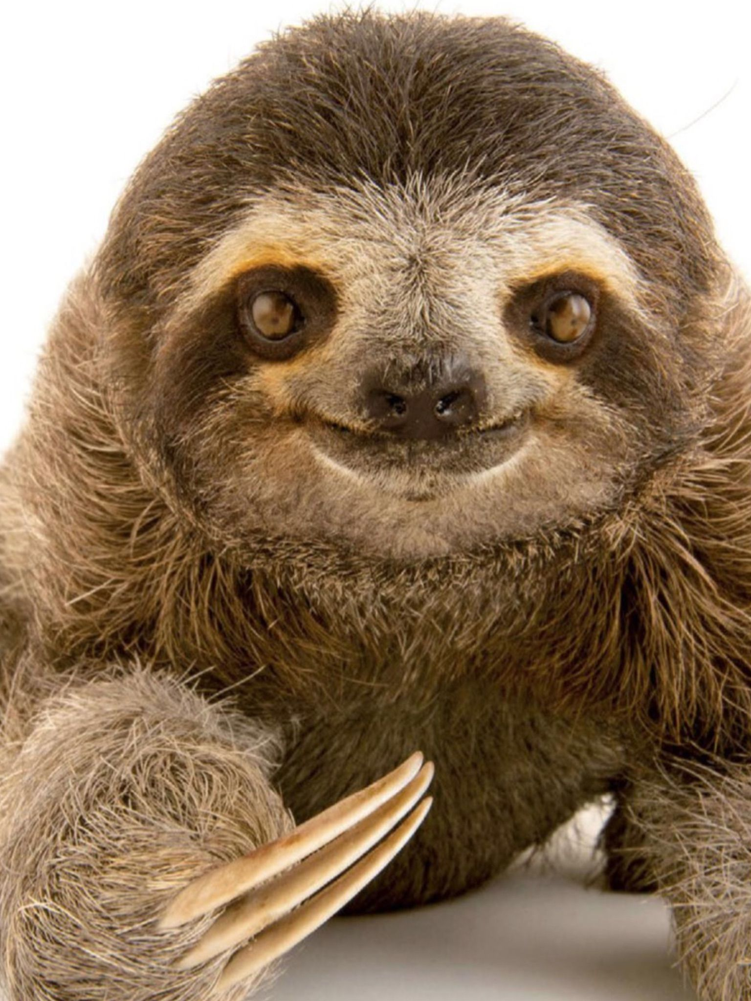 What a face! Cute baby sloths, Cute sloth pictures, Cute