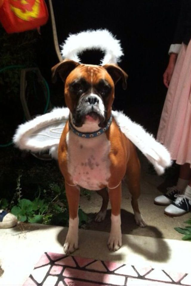 Dog Costume Ideas Costumecontest Bigdot Happydot I Weddy For