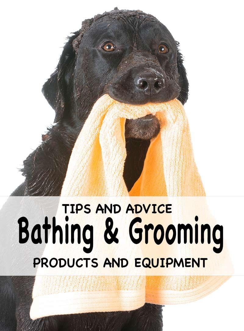 Bathing And Grooming Your Labrador Dog Wash Aggressive Dog Dog