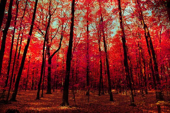 33 OFF Autumn photography red autumn leaves scarlet by bomobob