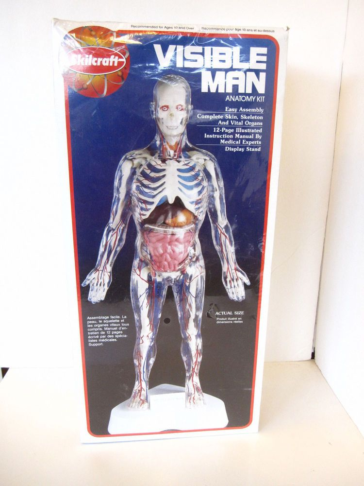 SKILCRAFT Model Anatomy Kit VISIBLE MAN 16\