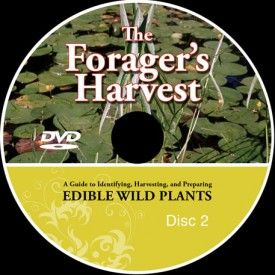 "The Forager's Harvest DVD Set by author Samuel Thayer, includes two discs covering all the plants discussed in ""The Foragers Harvest."""