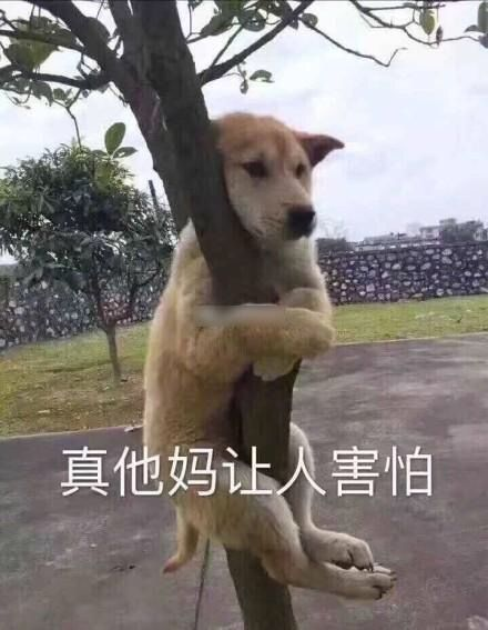 funny dogs,