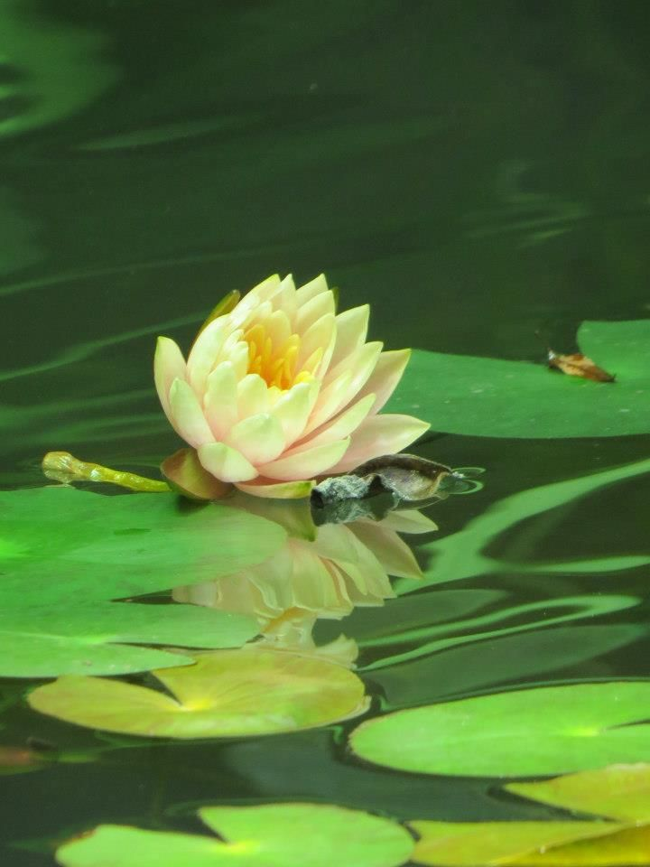 some kind of flowers tthat you will see/una de las clases de flores que veran.