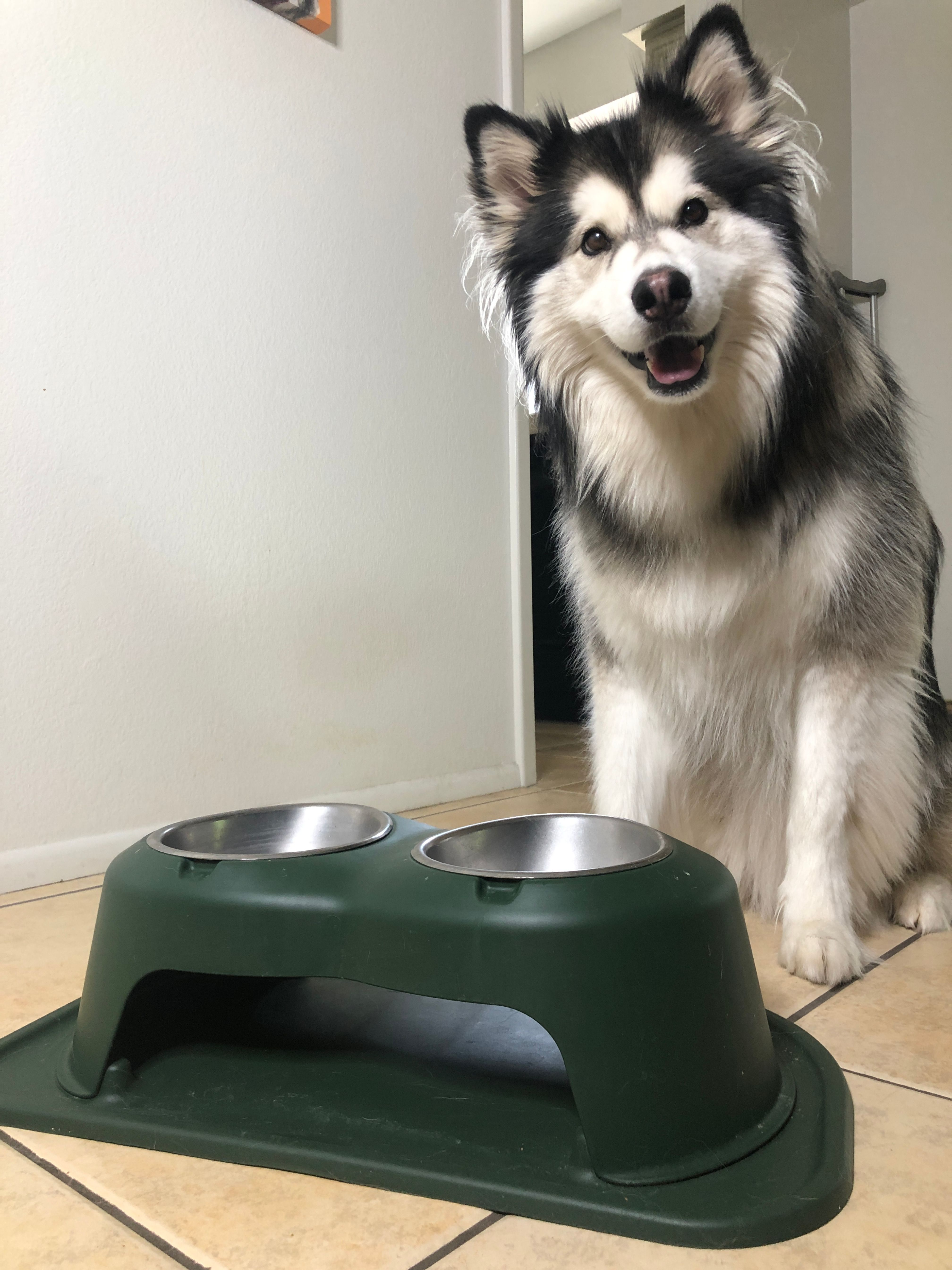 Make Your Pet Smile With The Weathertech Double High Feeding System Pets Wonder Pets Elevated Dog Bowls
