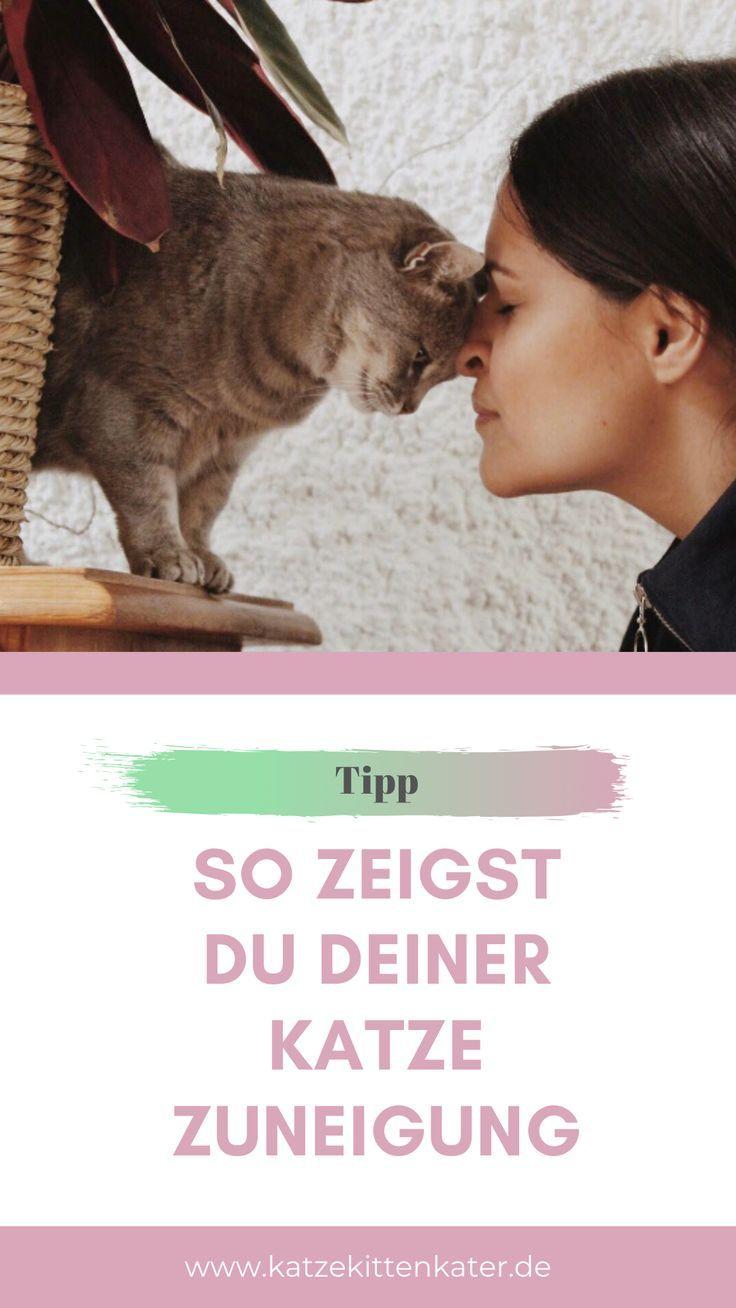 Der Schlüssel zu einem harmonischen Zusammenleben ist Kommunikation. Auch mit Katzen :) Ich zeige dir Tipps, wie du deiner Katze Zuneigung auf kätzisch zeigen kannst...  #katzekittenkater #katzenblog