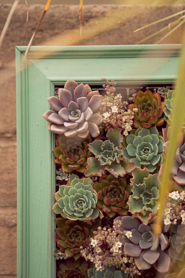 frames succulents