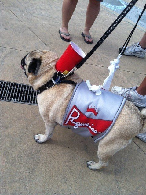 Pugweiser Pug Costume At Pugs In The Park To Benefit Colorado