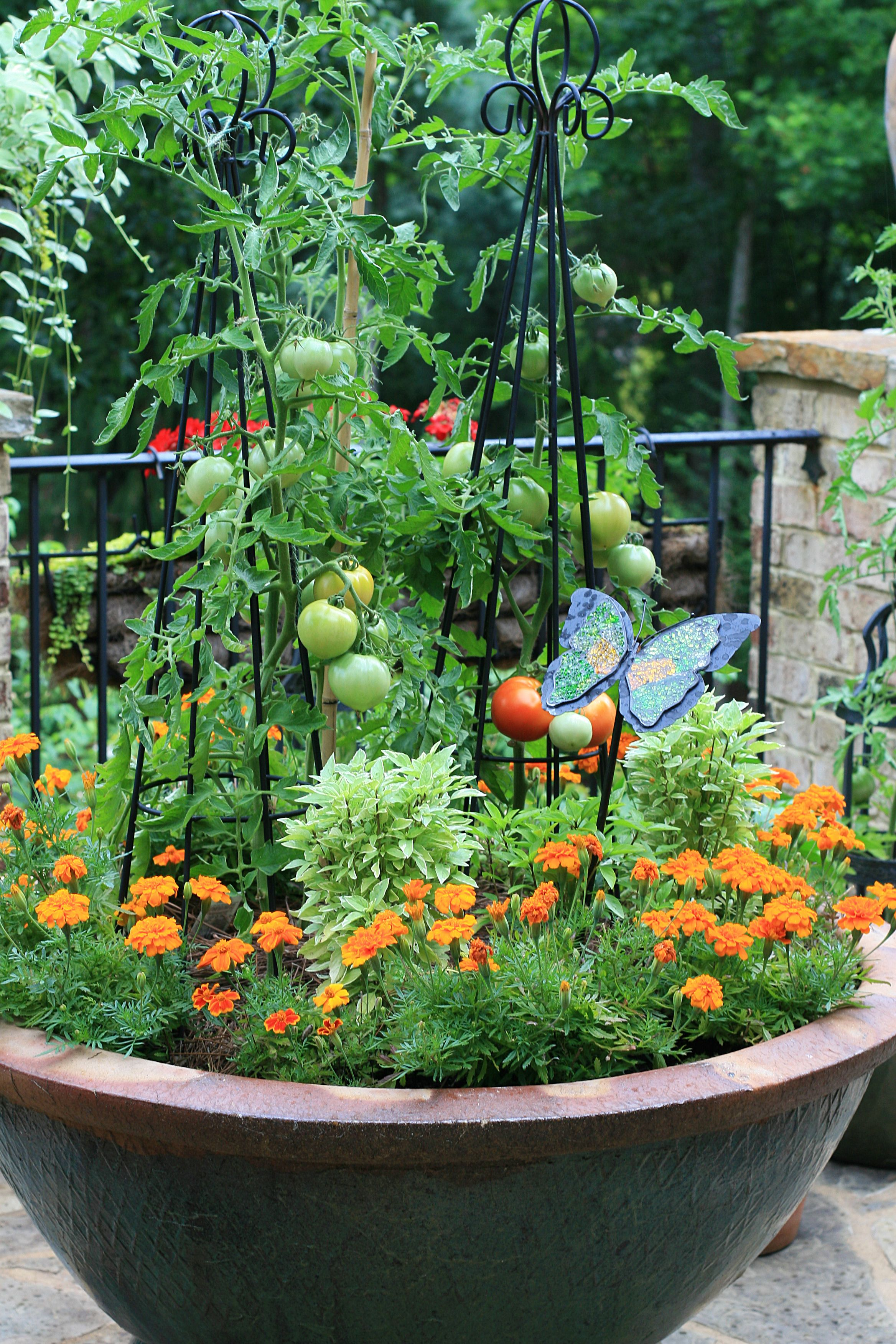 Tomato Garden Ideas tired of wimpy tomato cages check out these homemade tomato trellis ideas that are wind Tomatoes And Marigolds Im Not Much For Marigolds But This Looks Very Pretty