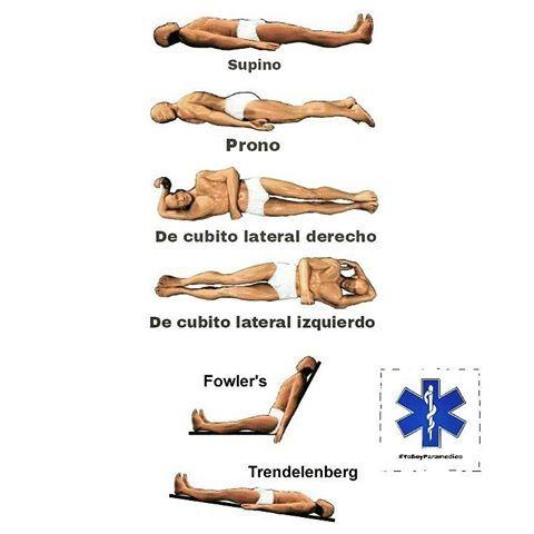 Resultado de imagen de posiciones anatomicas fowler   Anatomía ...