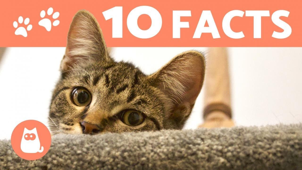 10 Things You (Probably) Didn't Know About CATS Cats