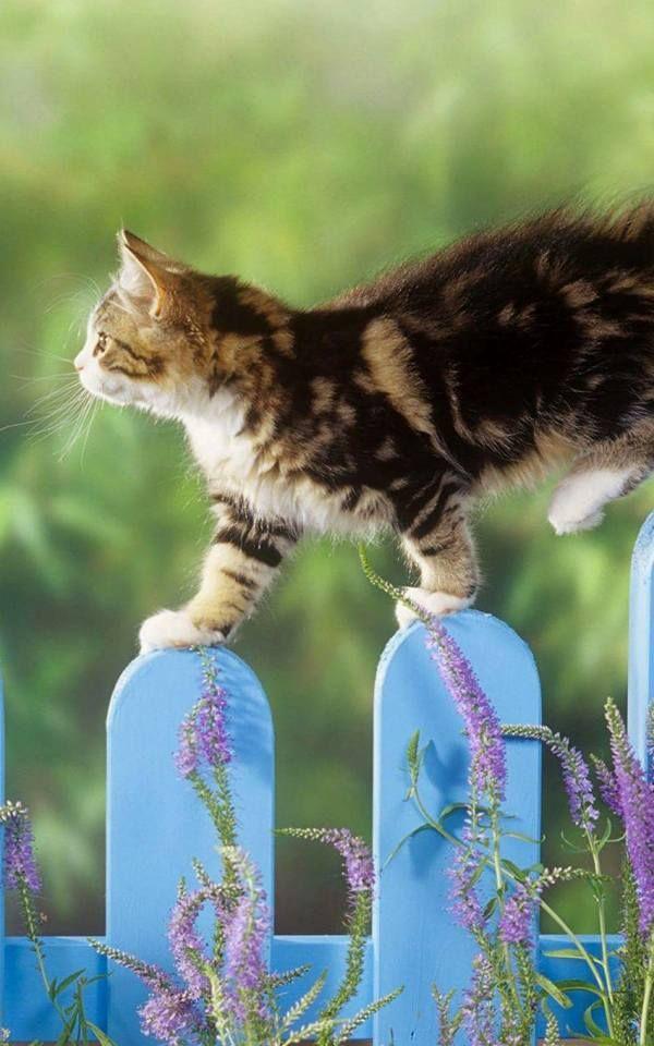 Cute Cats Wallpaper Wallpapers Background Iphone Fondepantalla
