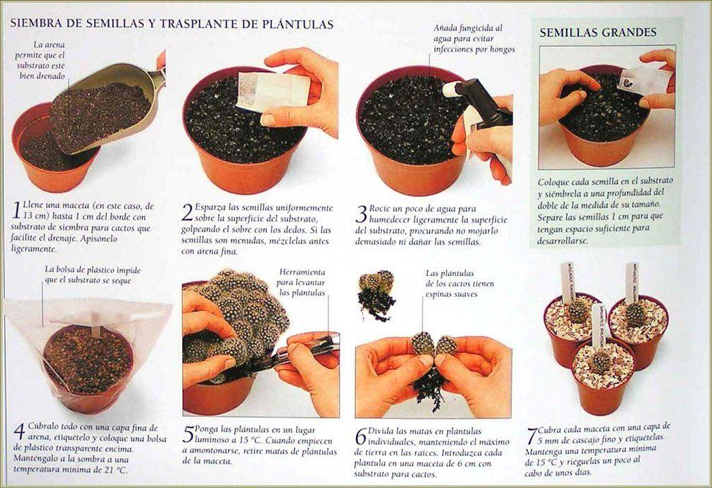 Las suculentas suculentas es facil y de ti - Como cuidar las hortensias en maceta ...
