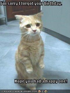 Are Sad birthday cat idea