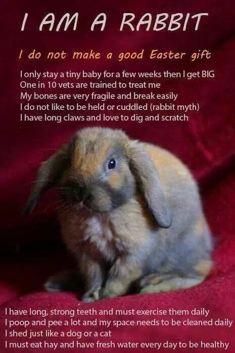 Bunnies Are Not Easter Presents Rabbit Animal Rescue League Animals For Kids