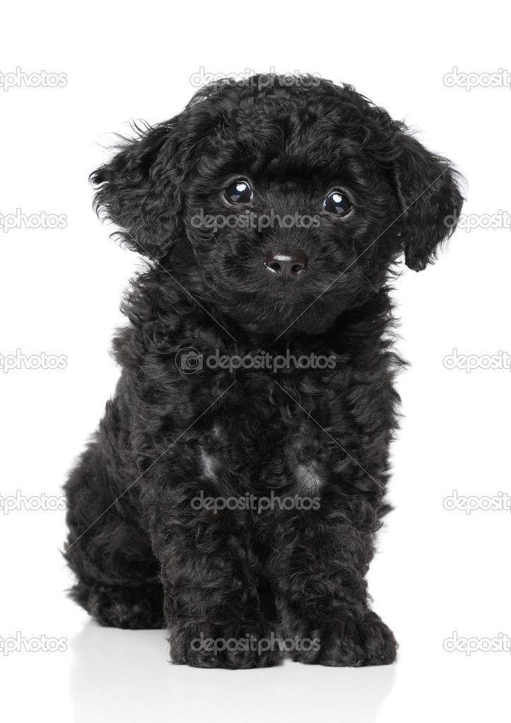 Black And White Stuffed Dog