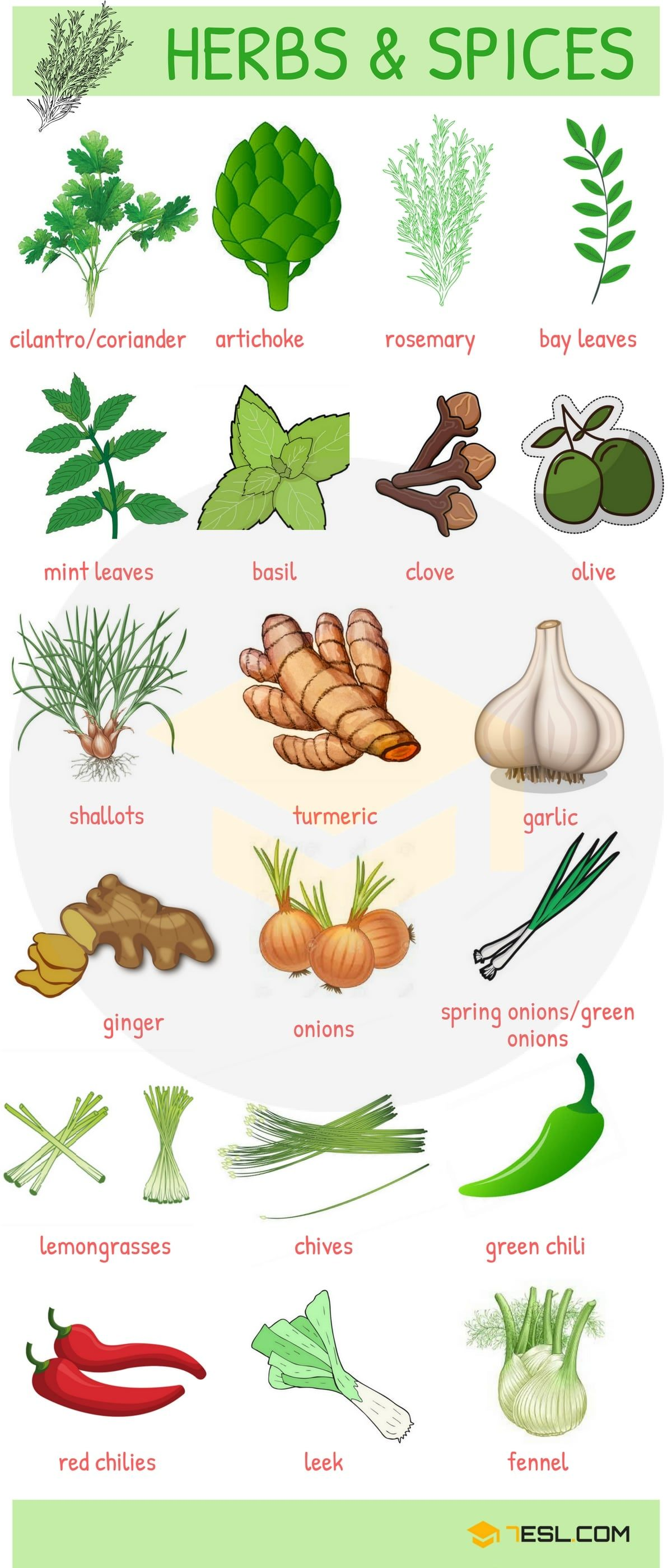List Of Herbs And Spices