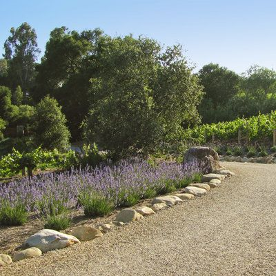 How To Dress Up Your Driveway   Sunset Magazine | Lavender, Driveways And  Landscaping