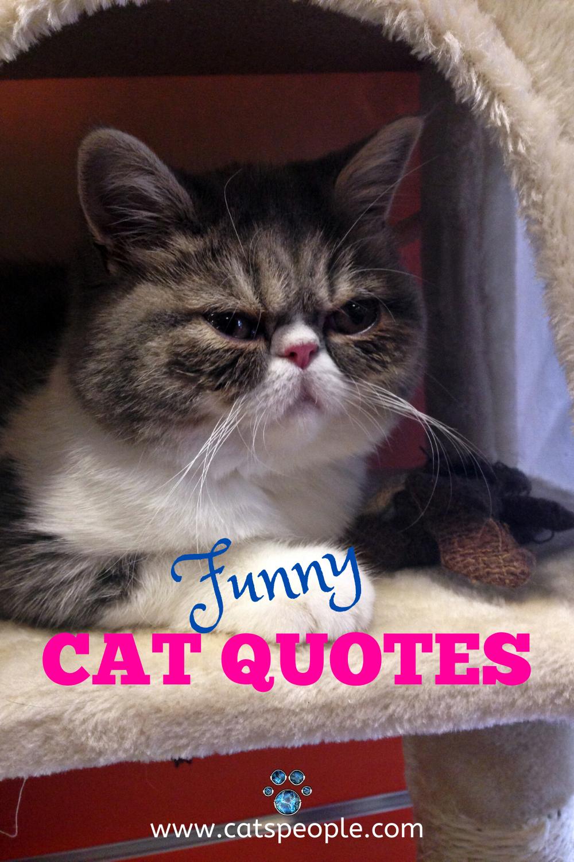 20 Funny Cat Quotes In 2020 Cat Quotes Funny Cat Quotes Cat Owner Quotes