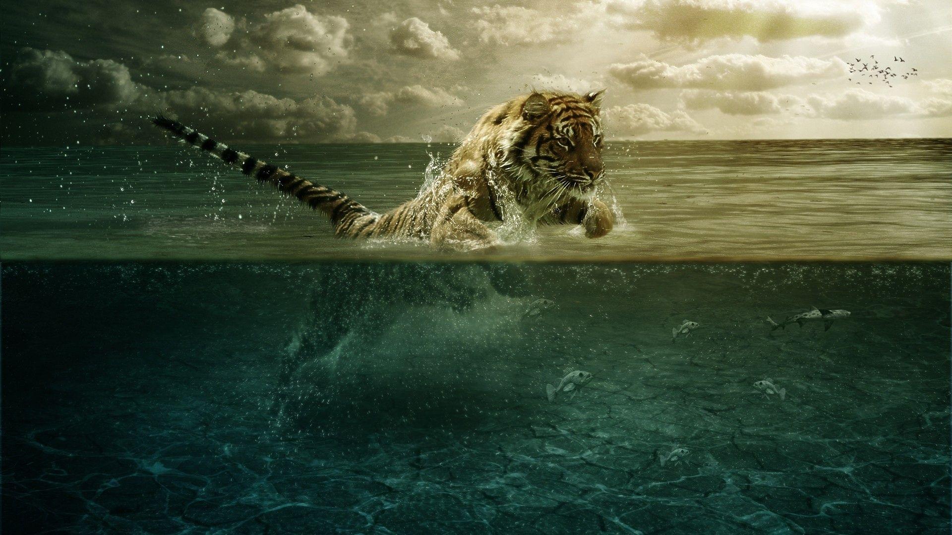 tiger wallpapers desktop background   animals wallpapers   pinterest