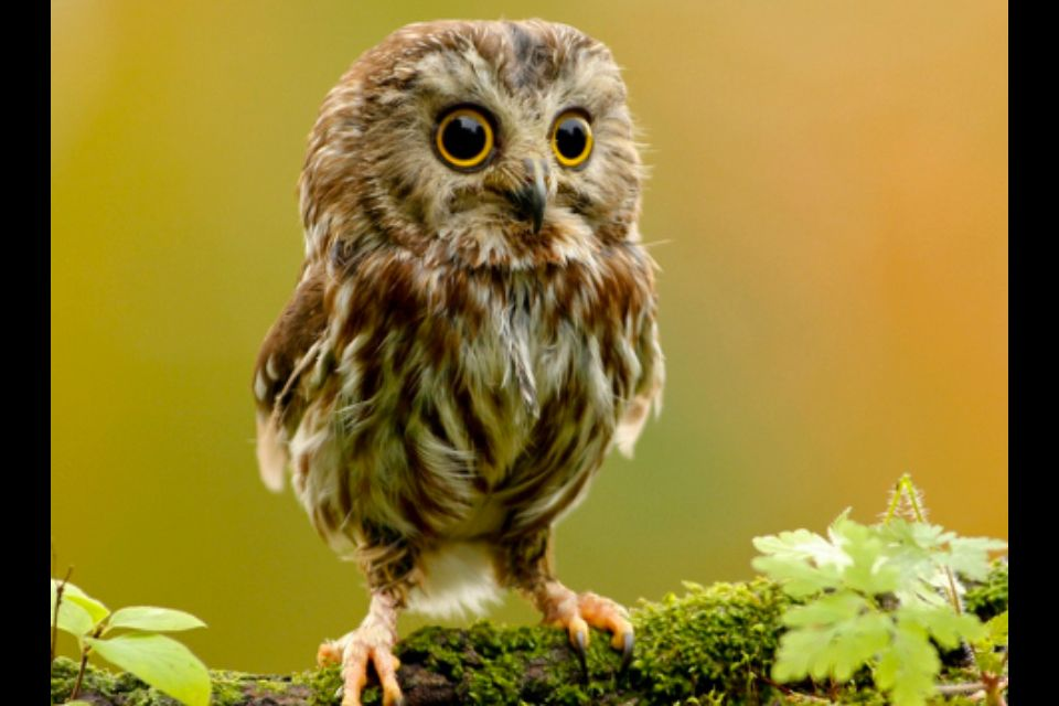 Baby owlet <3