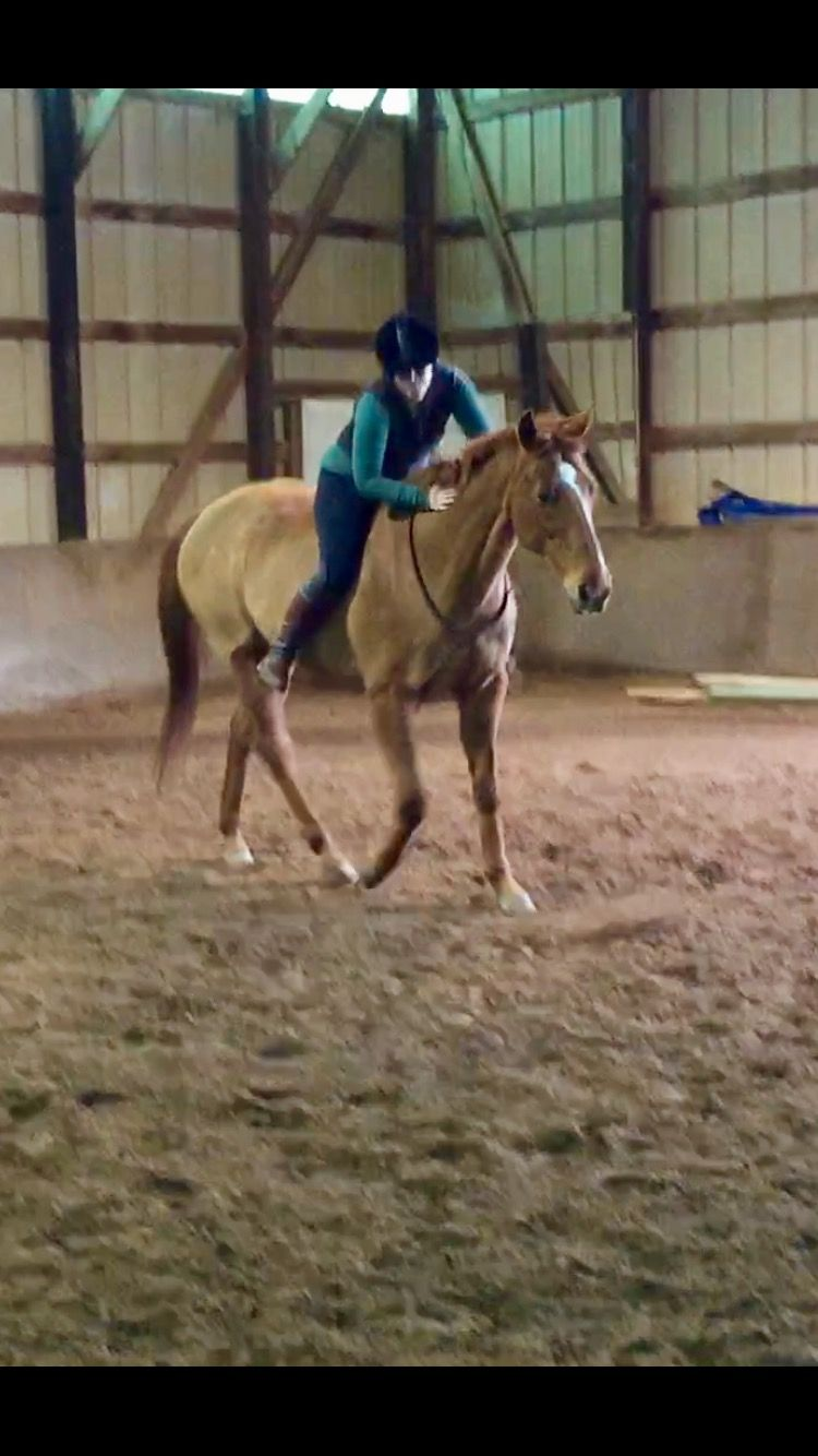 Pin On Western Natural Horsemanship Equine Therapy