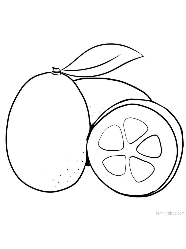Kumquat Coloring Page Pdf