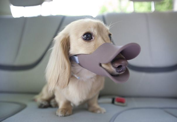 Shut your dog up AND embarrass the hell out of them so they will never want to wear a muzzle again.