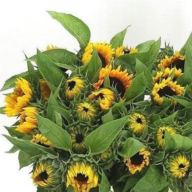 Sunflowers Sunrich Orange (length 80 cm) add a pop of colour to your flower arrangements! They are great for a country rustic theme for your wedding or event! Head over to www.trianglenursery.co.uk to find out more information! Great wholesale prices!