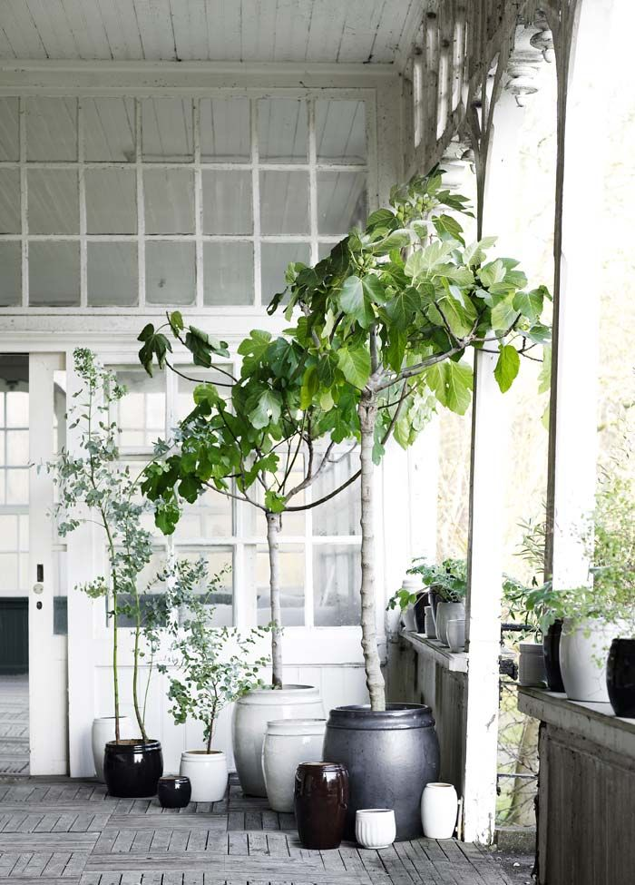 Bloesem living Tine k home accessories Havestue Pinterest - Decoracion De Terrazas Con Plantas