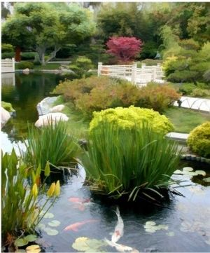 A walkway through a koi pond be sure to know if fish for Plantas para estanque peces koi