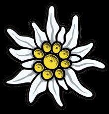 Edelweiss tattoos pinterest fleurs fleur edelweiss and broderie - Coloriage fleur edelweiss ...