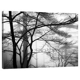 Trees & Fog in the Yellow Mountains Canvas Print