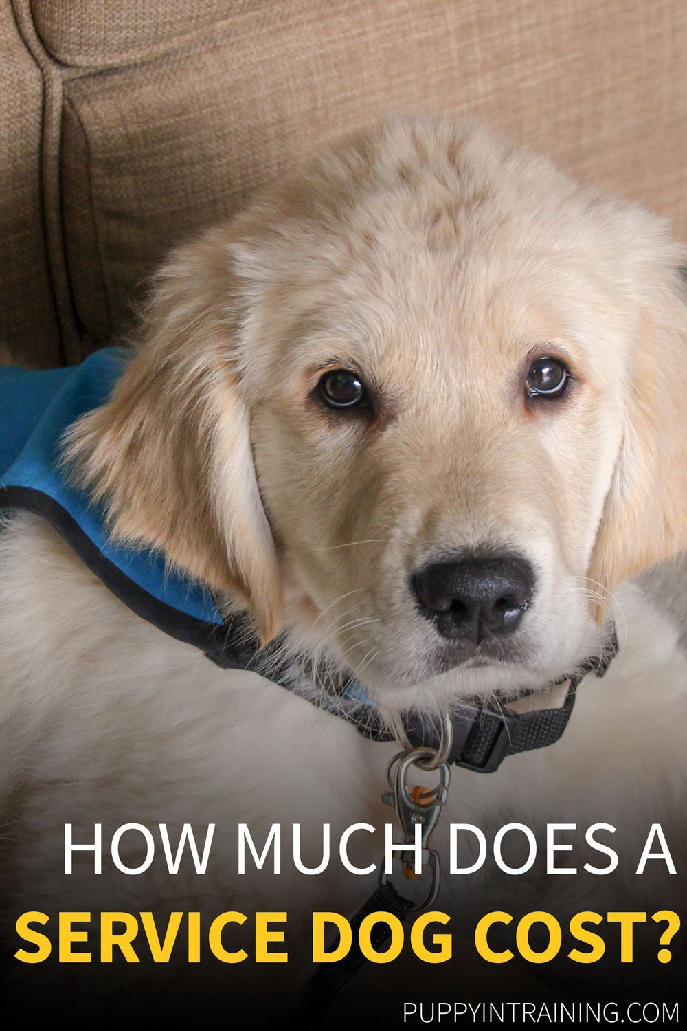 How Much Does A Service Dog Cost Have You Ever Wondered How Much